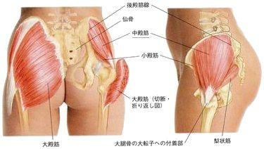 「臀部 骨格」の画像検索結果
